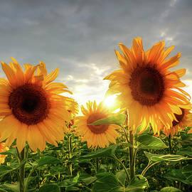 Steffen Gierok - Summer Sun