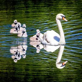David Millenheft - Summer Swans