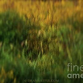 Maria Costello - Summer to Autumn