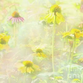 Summer's Dream by Marilyn Cornwell