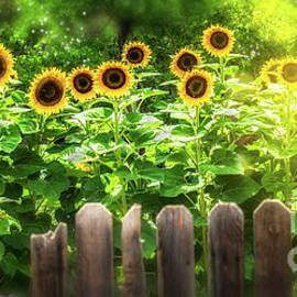 Summer's Sunflowers by Susan Warren