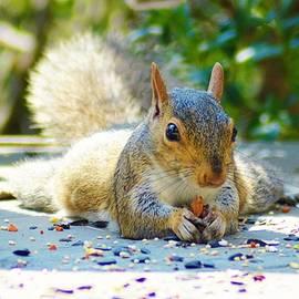 Kathy Kelly - Sun Bathing Squirrel