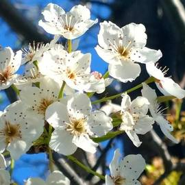 #sun Drenched #tree #blossoms So Sweet