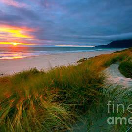 Sun Dunes by Beve Brown-Clark Photography