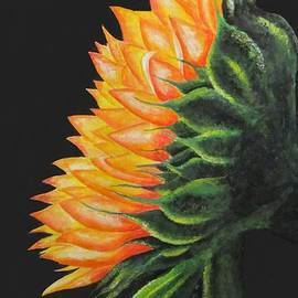 Sun Flower by Shahriar Aghakhani