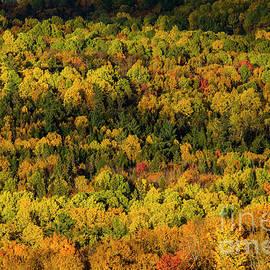 Alana Ranney - Sun Lighting Up Fall Trees