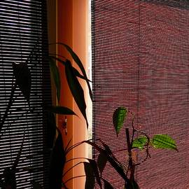 Terry Cobb - Sun Porch Shades