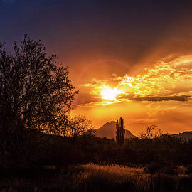 Saija Lehtonen - Sun Setting on the Sonoran