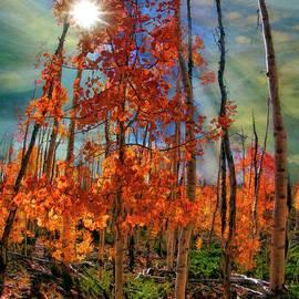 Sun Though Rising Fall by Blake Richards