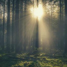Sun trough the trees by Joost Lagerweij