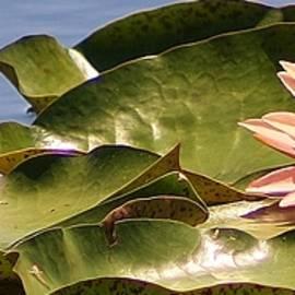 Bruce Bley - Sunbathing on the Pond