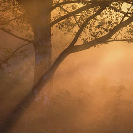 Sunburst - Chris Dale