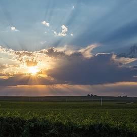 Sunburst in the morning by Lynn Hopwood