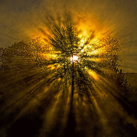 Sunburst by Marty Saccone