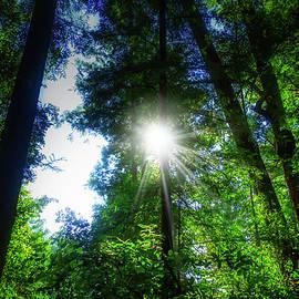 Garry Gay - Sunburst Through Trees
