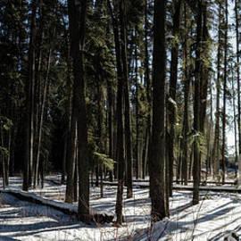 Brad Allen Fine Art - Sundial Forest