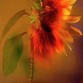 Sunflower # 8. by Alexander Vinogradov