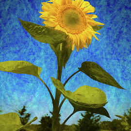 Sunflower 26 by Mike Penney