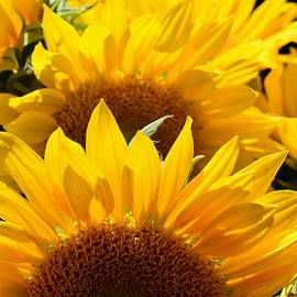 Sunflower Abstract by Jimmy Chuck Smith
