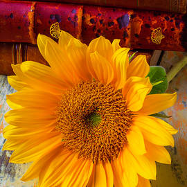 Sunflower And Leather Books - Garry Gay