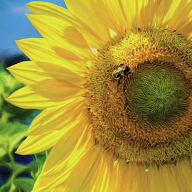 Sunflower Bee by Anita Hubbard