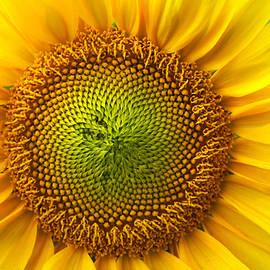 Benanne Stiens - Sunflower