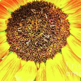 Broken Soldier - Sunflower