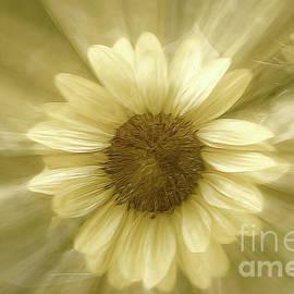 Mellissa Ray - Sunflower Burst