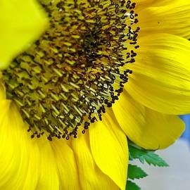 Sunflower Center  by Gayle Miller