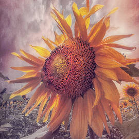 Debra and Dave Vanderlaan - Sunflower Dawn in Soft Colors