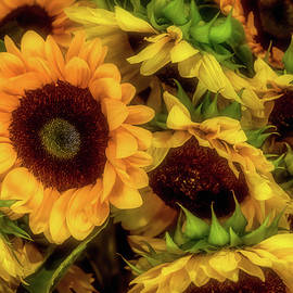 Sunflower Garden - Garry Gay