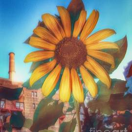 Sunflower in the City - Urban Beauty by Miriam Danar
