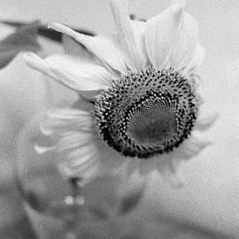 Jamie Hogan - Sunflower