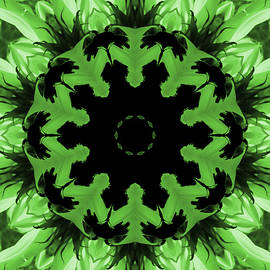 Aimee L Maher Photography and Art Visit ALMGallerydotcom - Sunflower Kaleidoscope in Green