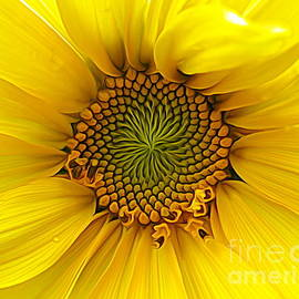 Rose Santuci-Sofranko - Sunflower Macro Expressionist Effect