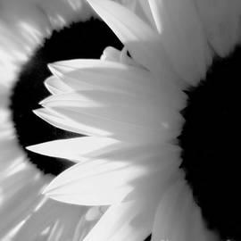 Sunflower Mute by JoNeL Art