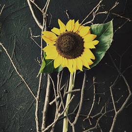 Mythja Photography - Sunflower