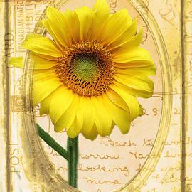 Nina Silver - Sunflower on Vintage Postcard