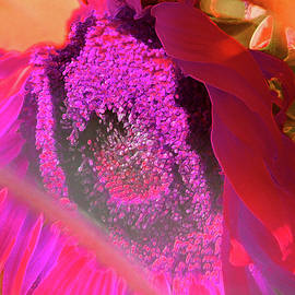 She Comes in Colors - Psychedelic Sunflower - Floral Photographic Art by Brooks Garten Hauschild