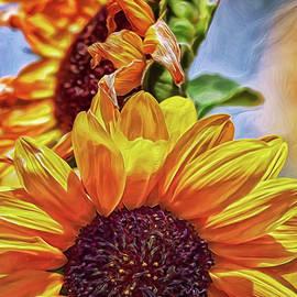 Sunflower Risen by Doctor MEHTA