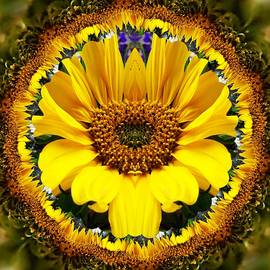 Nancy Pauling - Sunflower Roundel