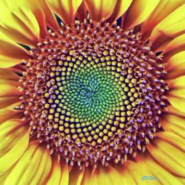 Sunflower Sun by Claudia O'Brien