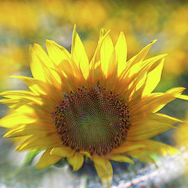 Sunflower With Lens Flare by Natalie Rotman Cote