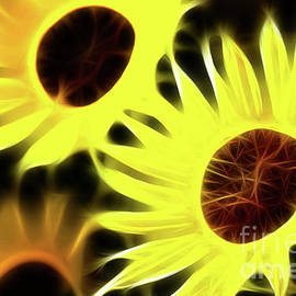 Gary Gingrich Galleries - Sunflowers-5141-Fractal
