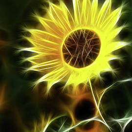 Gary Gingrich Galleries - Sunflowers-5200-Fractal