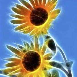 Gary Gingrich Galleries - Sunflowers-5246-Fractal