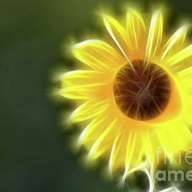 Gary Gingrich Galleries - Sunflowers-5289-Fractal