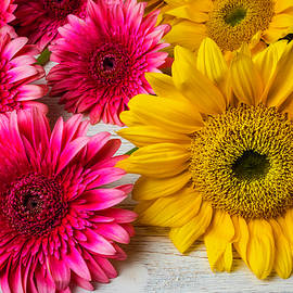 Sunflowers And Pink Gerbera Daises - Garry Gay
