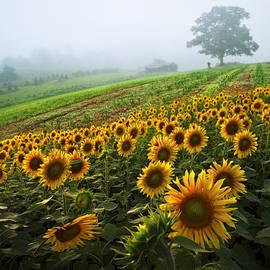 Debra and Dave Vanderlaan - Sunflowers at the Farm