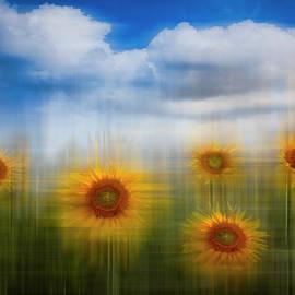 Debra and Dave Vanderlaan - Sunflowers Dreamscape